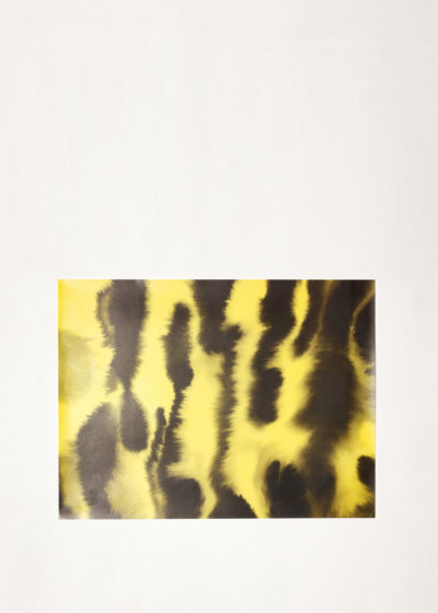 Tiger wrapping paper (10 sheets) by Wild Animals